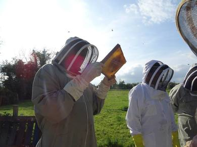 Bee keeping Course in Kildare